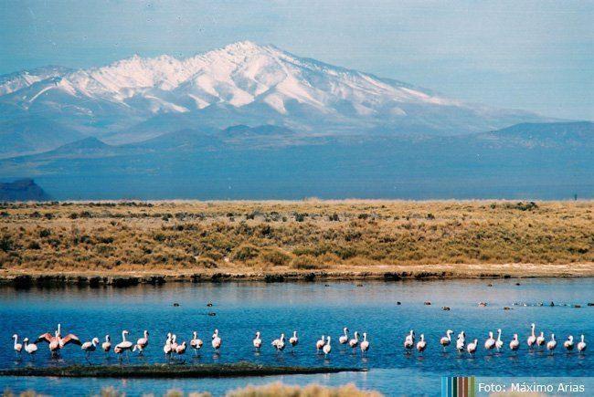Reserva Natural Laguna de Llancanelo