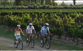 Disfrutando un recorrido entre las viñas mendocinas